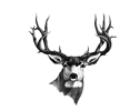 Image of deer mount